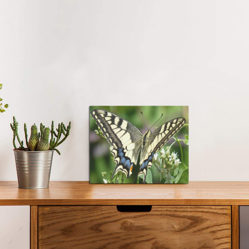 """Butterfly 2 Photo Panel for Tabletop Display 8""""x6"""""""