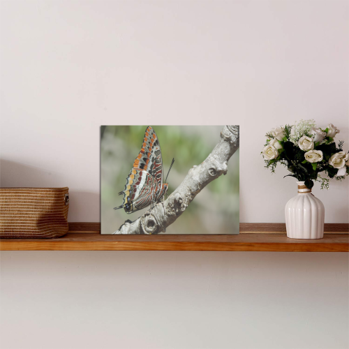 """Butterfly 1 Photo Panel for Tabletop Display 8""""x6"""""""